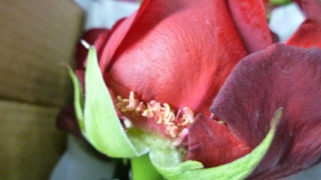 Bad Handling of Flower Boxes